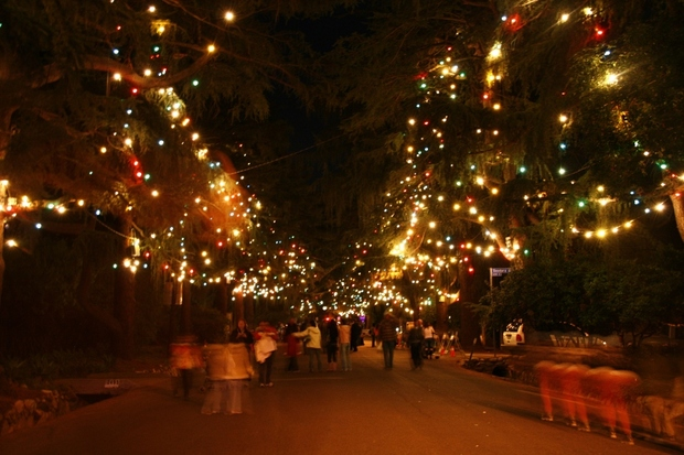 - Christmas Tree Lane Route In Altadena, CA 91001 Citysearch